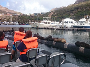 Cape Town Boat Tours - boat trips around Cape Town - whale watching / shark encounters / high speed boat adventures